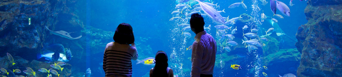 aquarium_main