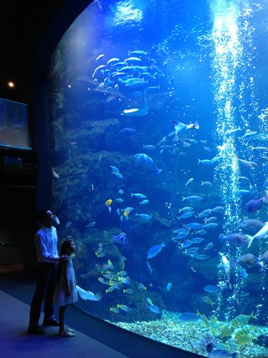 aquarium_sub_2
