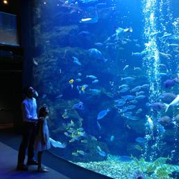 aquarium_thumbnail2