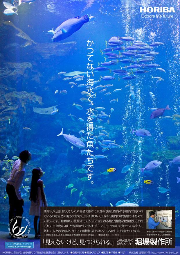 wedge_pict_aquarium