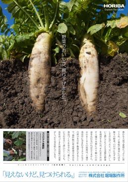 210~297_vegetable_wedge
